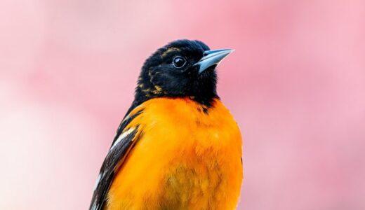【環境と鳥にやさしい】バードフレンドリー®コーヒーが買えるお店は?
